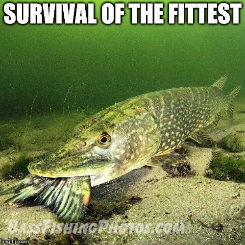 Survivalofthefittestmeme.jpg